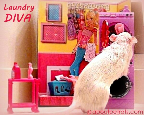 Laundry Diva